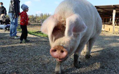 Incontri con gli animali in fattoria didattica
