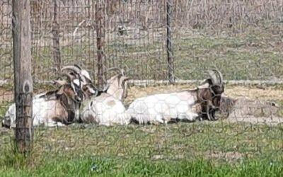 I nostri animali: Molla, Spillo & Co.