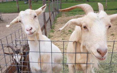 I nostri animali: Libera, Lavanda, Lavinia