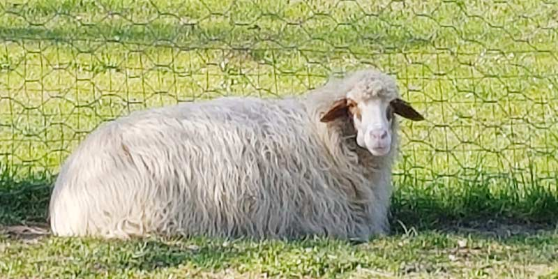 I nostri animali: Pasqualina