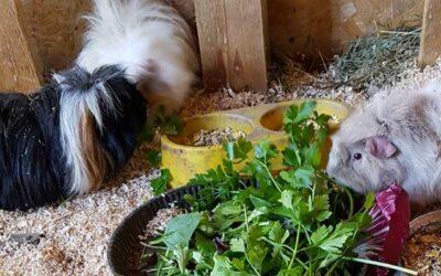 I nostri animali: I Porcellini