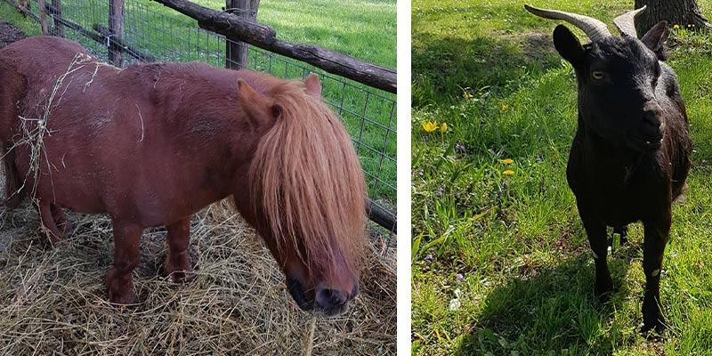 I nostri animali: Lillo e Lella
